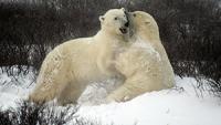 Robeco: Steuern wir bei Aktien auf einen Bärenmarkt zu?